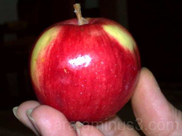 my apple !
