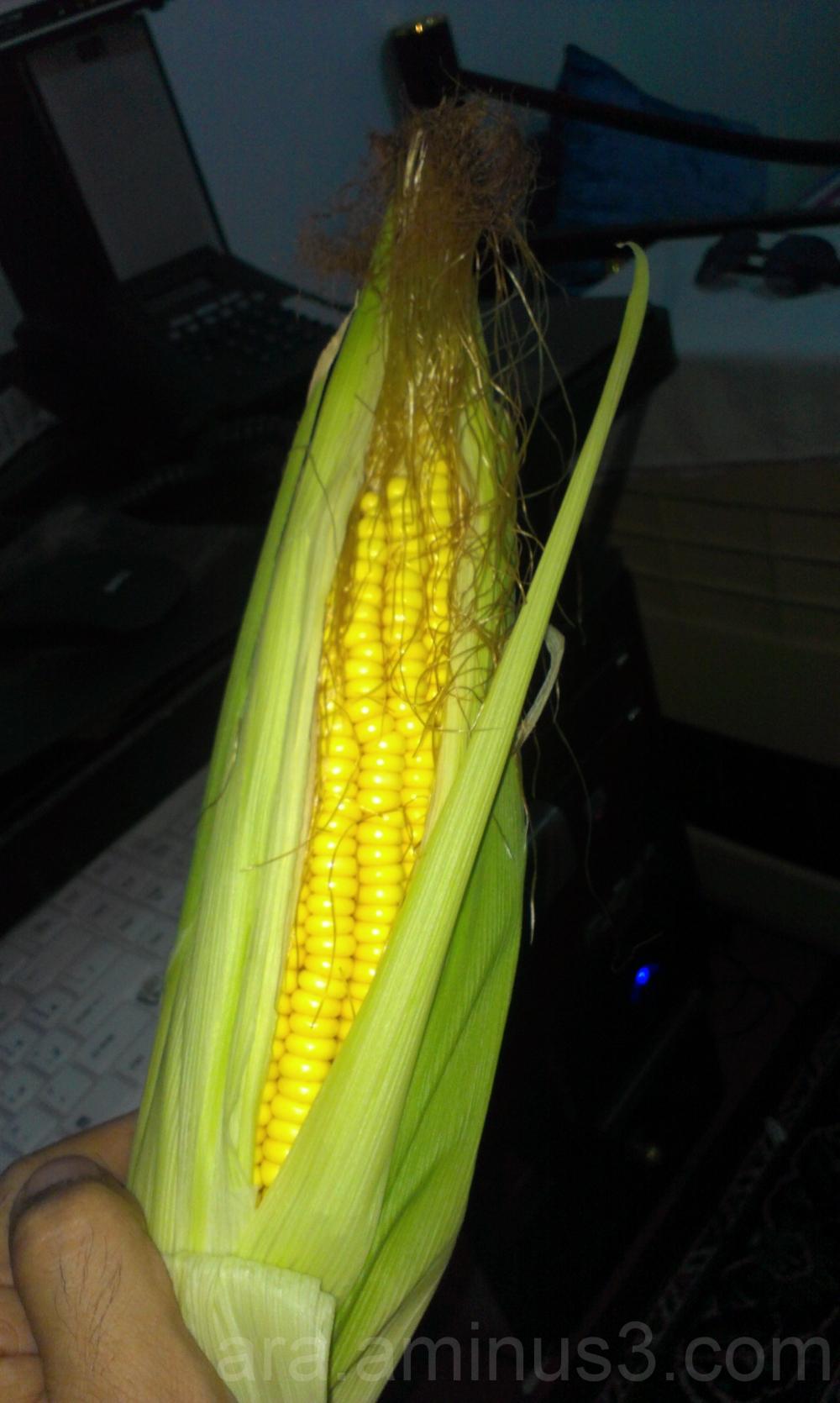 nice corn !