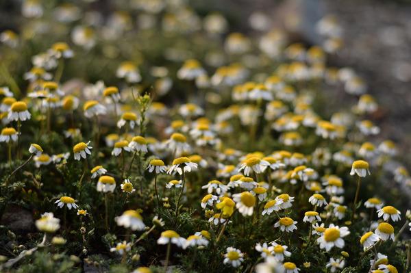 nice small flowers ...