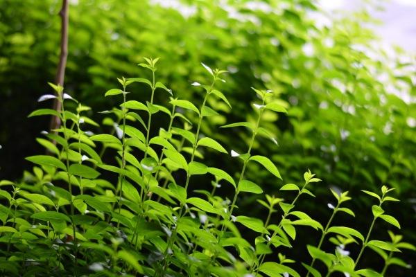 greeny life...