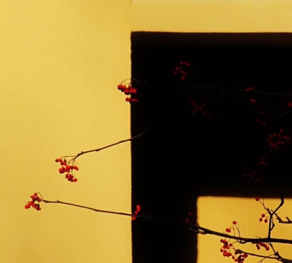 Flors i ombres