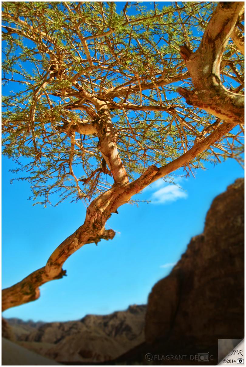L'arbre du désert - The desert tree