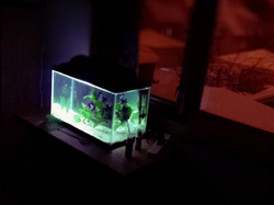 aquarium in the wintertime
