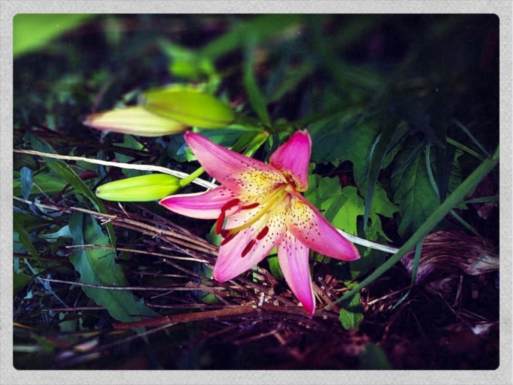 this week's blooms
