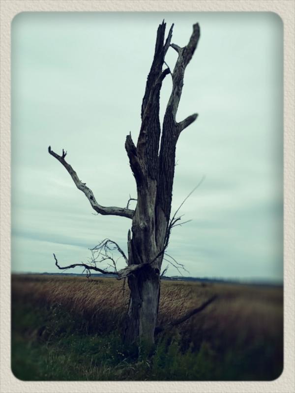 horicon marsh