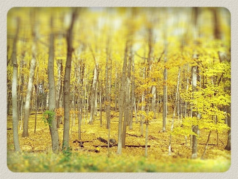 gadren yellow