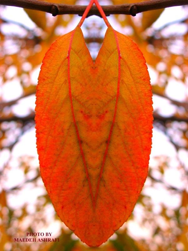 Colorful autumn2