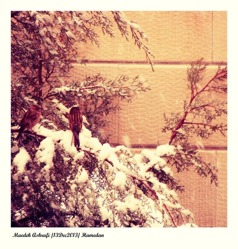 گنجشکک اشی مشی لب بوم ما  مشين برف میاد گوله میشی