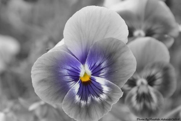 Flower.1394