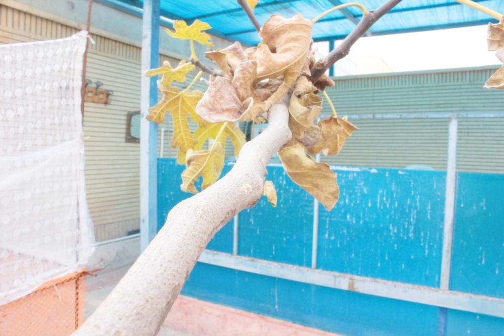 Branch , شاخه درخت