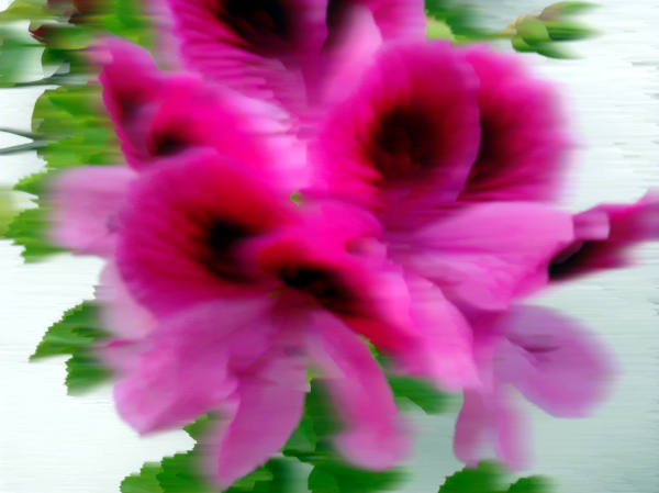 dabnotu, lensblr, flower, spring, abstract