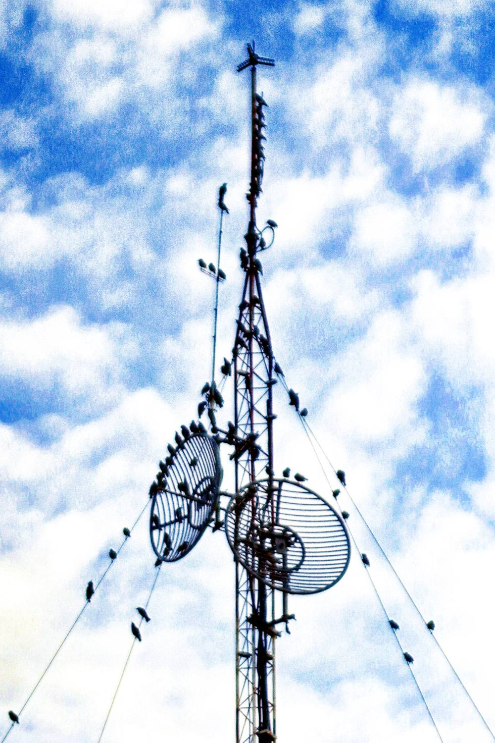Might be magpies on an antenna, slightly overcast.