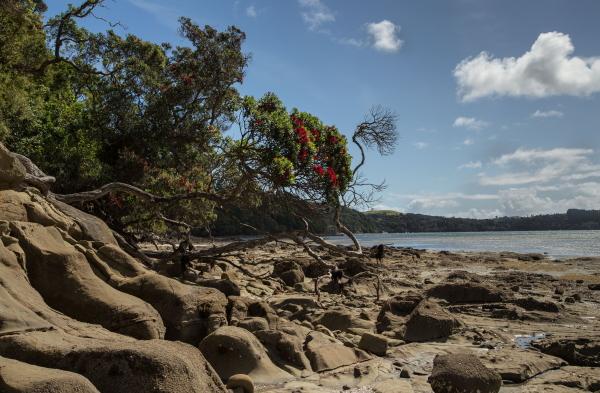 Brick Bay, Matakana, Kawau Bay