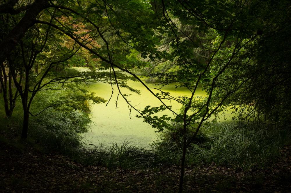 Eastwoodhill arboretum, pond