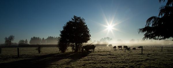 Waikato frosty morning