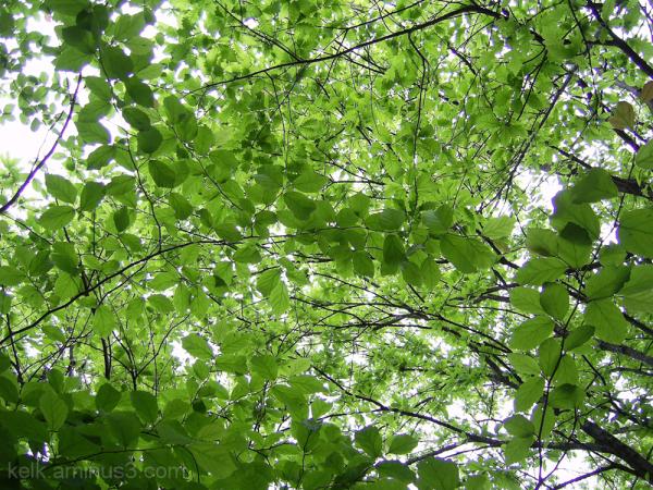 شاخ و برگ درختان