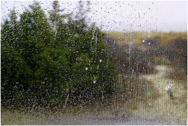 Beautiful Rainy day
