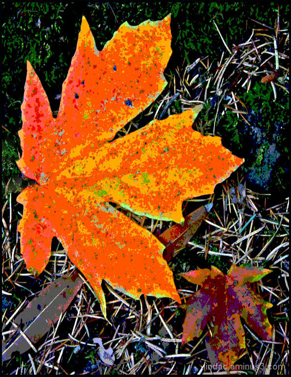 Fall Leaf, Happy Isles, Yosemite