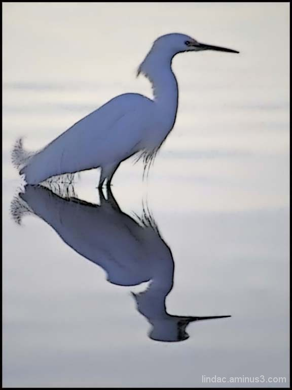 Reflection of Crane