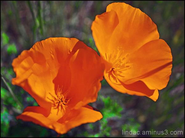 Spring & Poppy's
