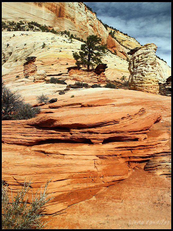 Zion Rock Formations