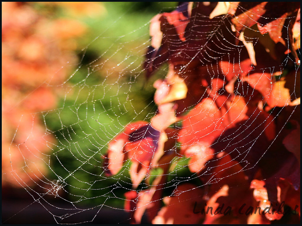 Spider Web Fall