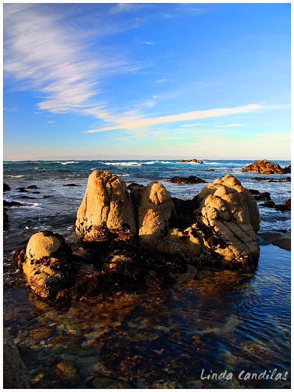 Asilomar State Beach, Pacific Grove
