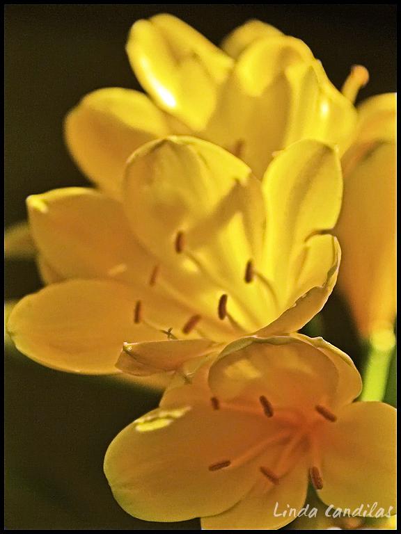 Spring Flowers, Monterey