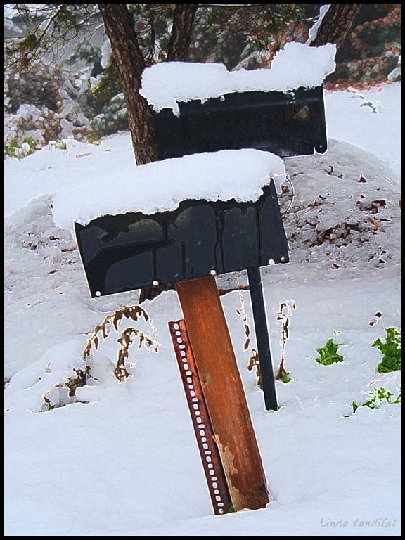 Snow on Mailbox's