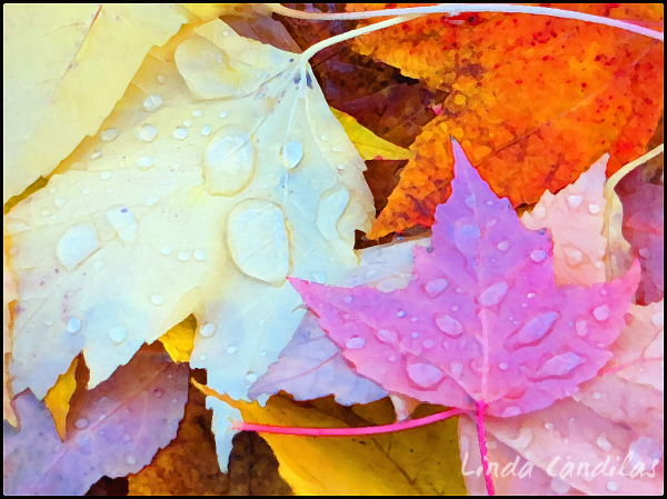 Autumn Rain Drops 2