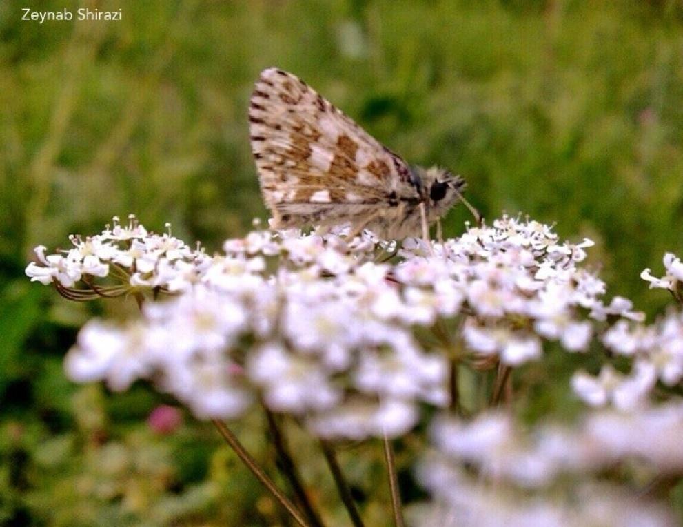 Butterfly, flower, green