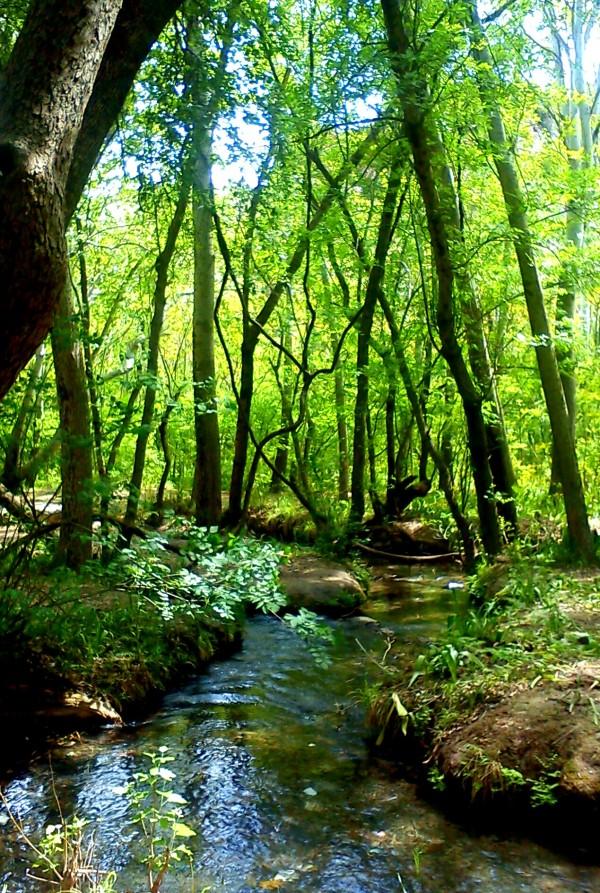forest, iran, Dargaz