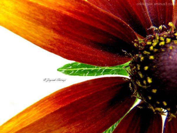 red yellow Flower macro