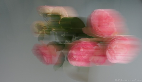 S'envoyer des Fleurs