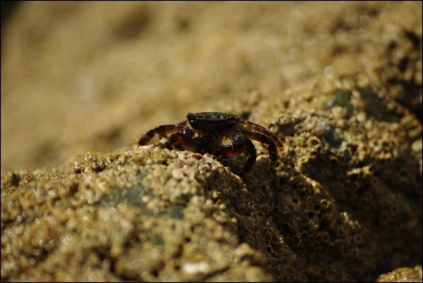 petit crabe au sommet d'un rocher