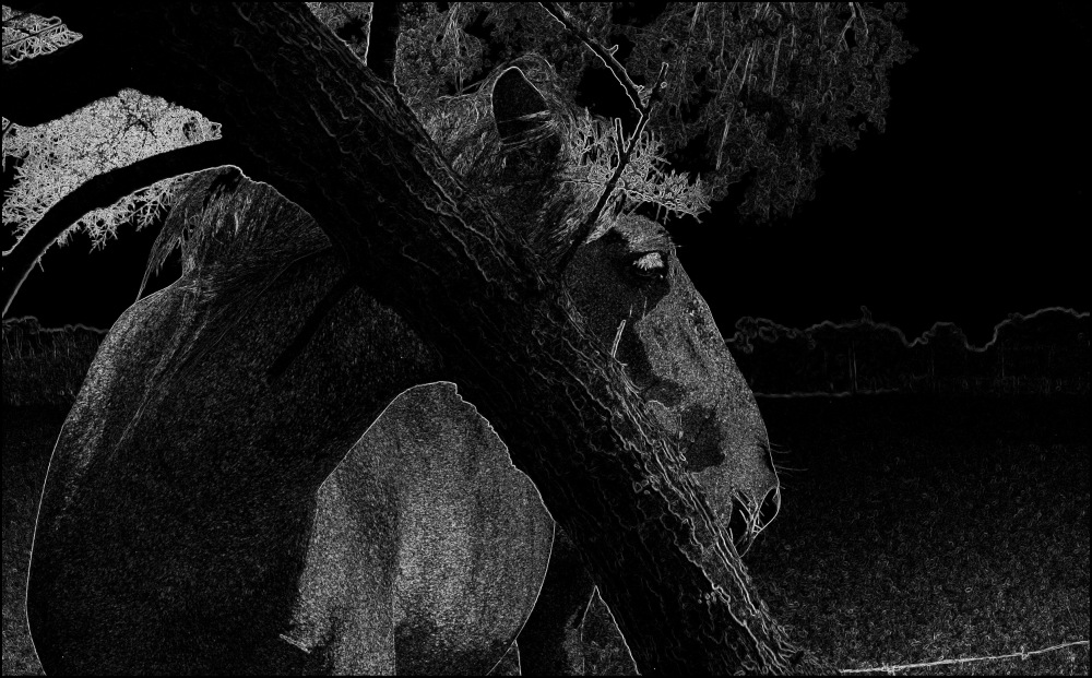 BW abstract of a horse