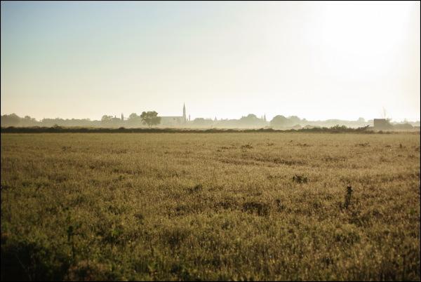 dew in a field, petite camargue