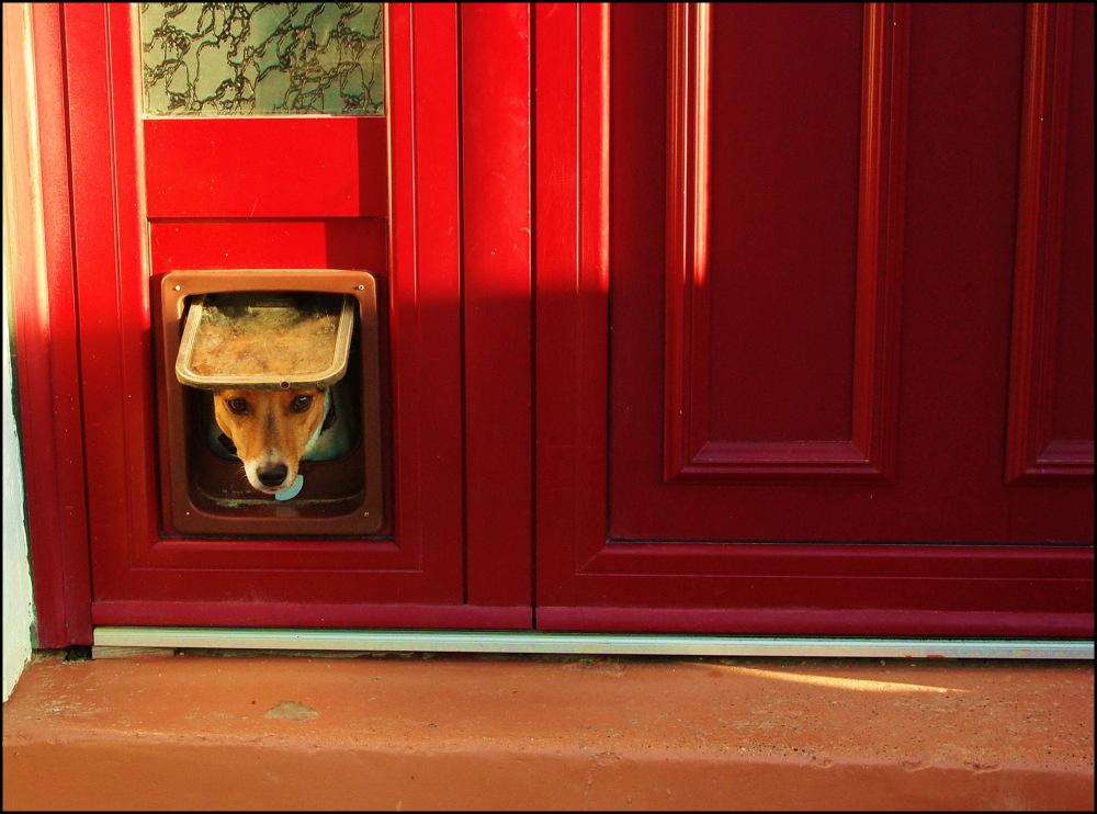 Porte ou fenêtre ?