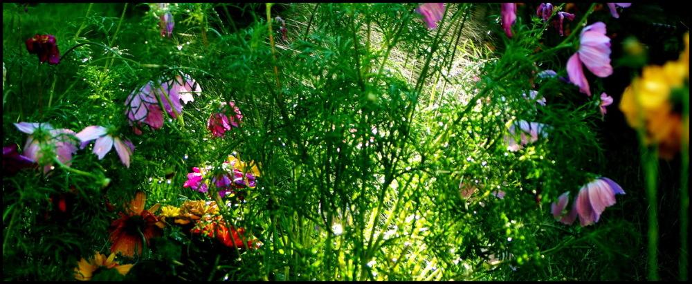 My own private jungle