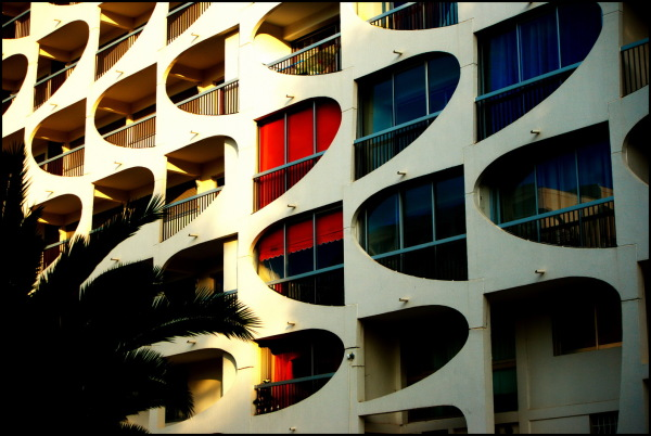 Vue du palmier | A view from the palm tree