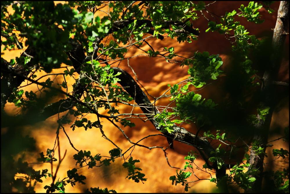 Ocre et vert  |  Green and ochre