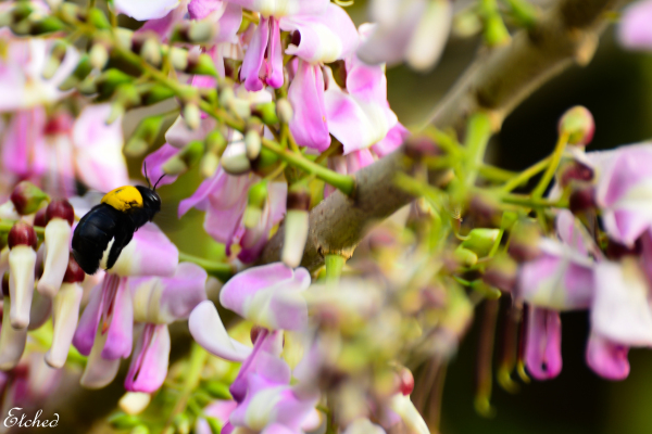 The Colorful world of a Bumblee Bee..