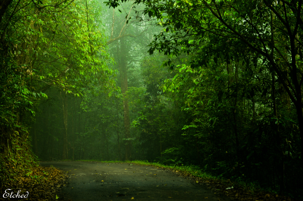 Through the misty woods..