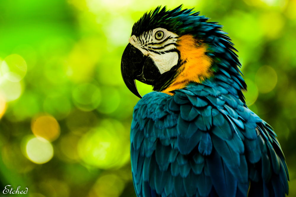 The Majestic Macaw