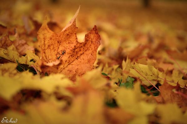Autumn colors..