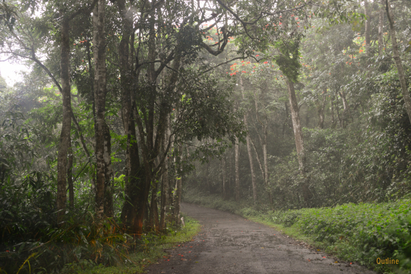 Route to Gavi
