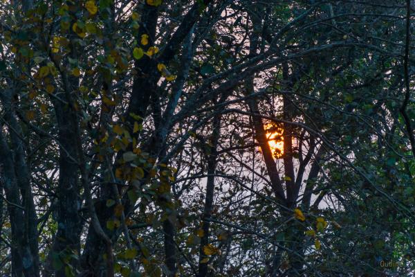 Parambikulam sunrise