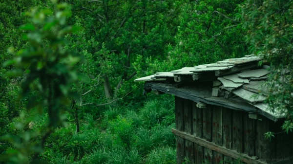 Shed in an apple orchard in Kinnaur