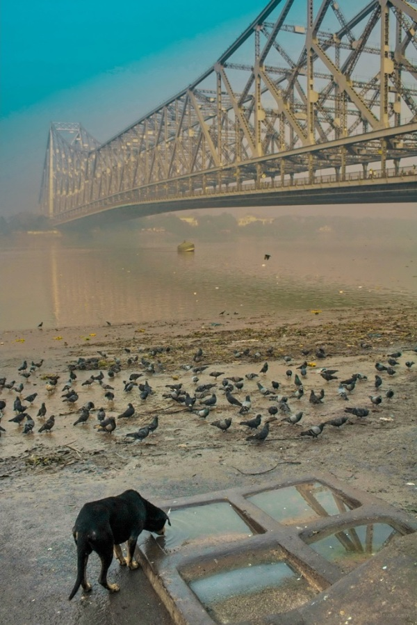 Life in Calcutta