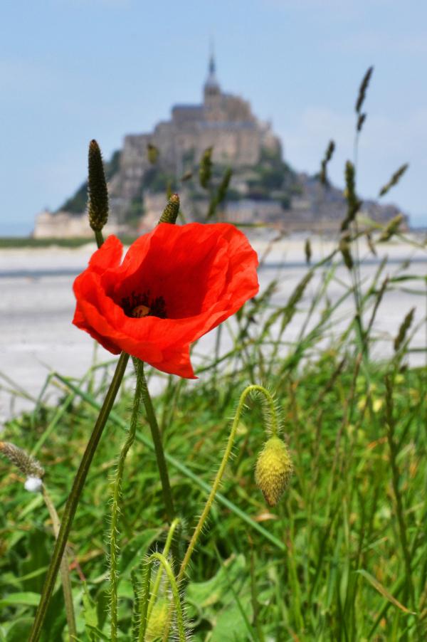 Mont St Michel #1
